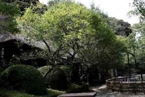 緑に埋まる茅葺屋根の松連庵
